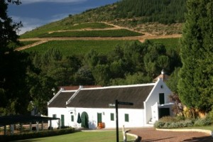 hermanus vineyard