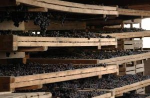 drying-grapes-for-amarone