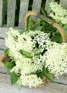elderflower_cordial-4959