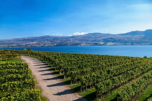 Mission Hill Winery Overlooking Lake Okanagan