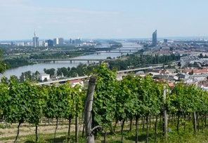 Vineyards Vienna
