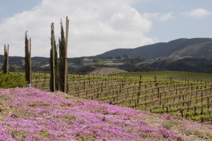 Springtime in the Temecula Valley AVA