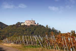 The Hambach Castle and Vineyard