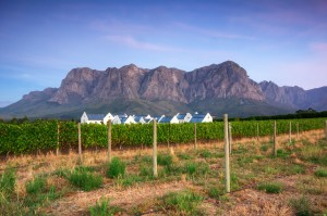 Stellenbosch Vineyards in the shadow of Table Mountain