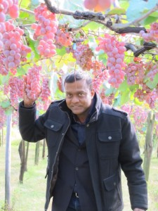 Our author in the Yamanashi Vineyards, admiring the Koshu grapes.