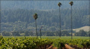 Photo via: http://www.duckhorn.com/Our-Story/Vineyards/Three-Palms