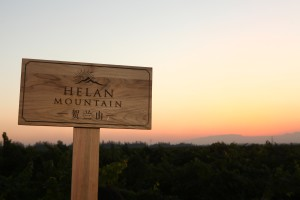Photo of Helan Mountain vineyards used with permission of Indigo Communication
