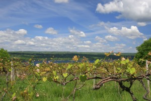 Vineyards in New York's Finger Lakes AVA