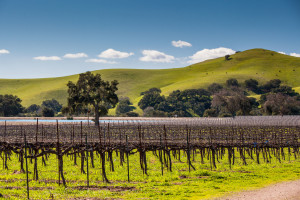 Firestone Vineyards in the new Los Olivos District AVA
