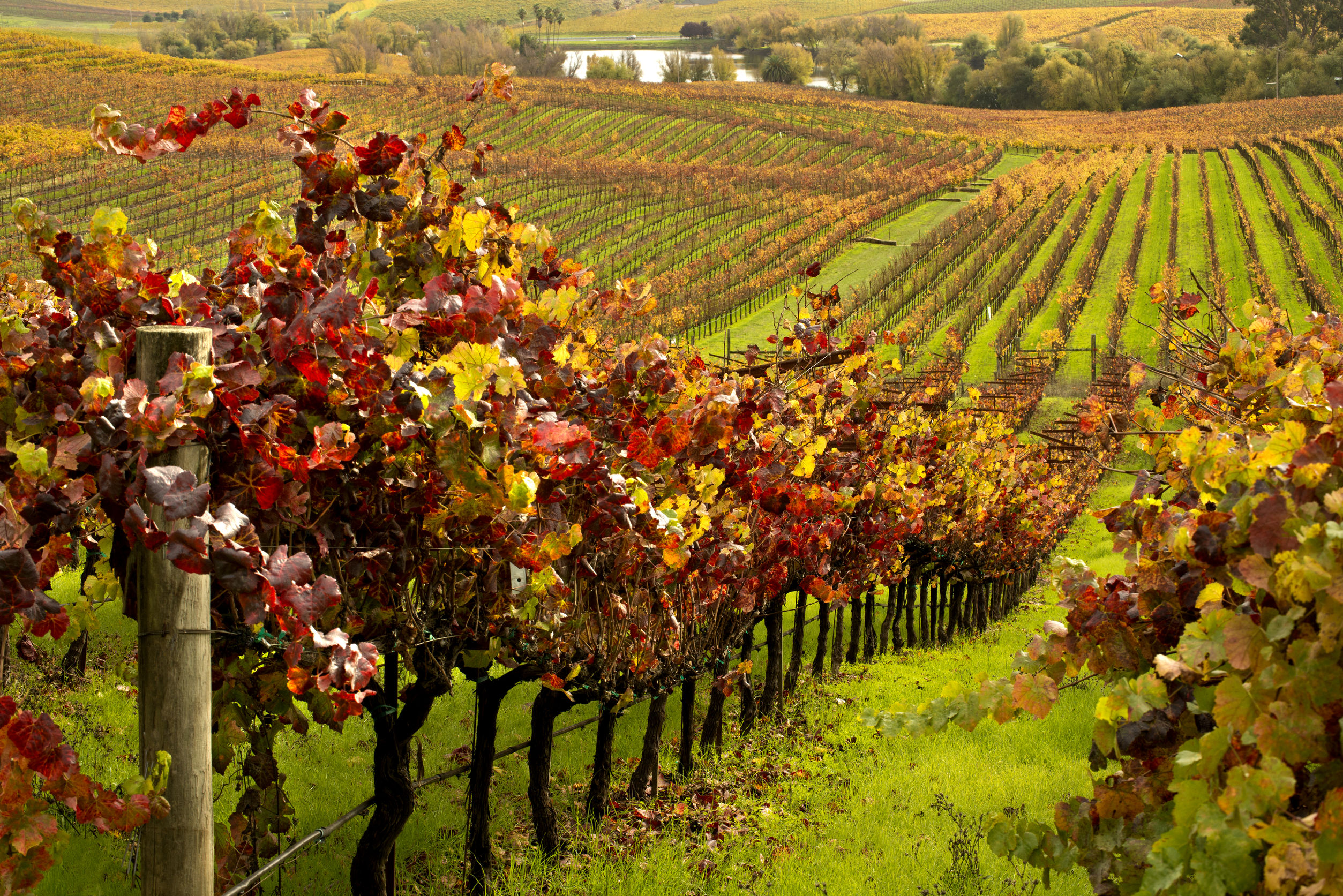 Conference Preview The Role Of Viticulture In The