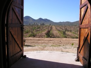 "A view of the vineyards at Adobe Guadalupe from the Azteca horse stable (Photo Credit"" Matilde Parente)"