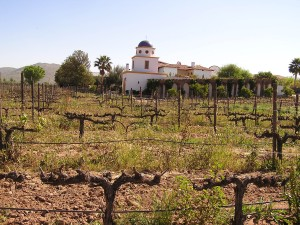 The vineyards at Adobe Guadalupe photo credit: Matilde Parente)