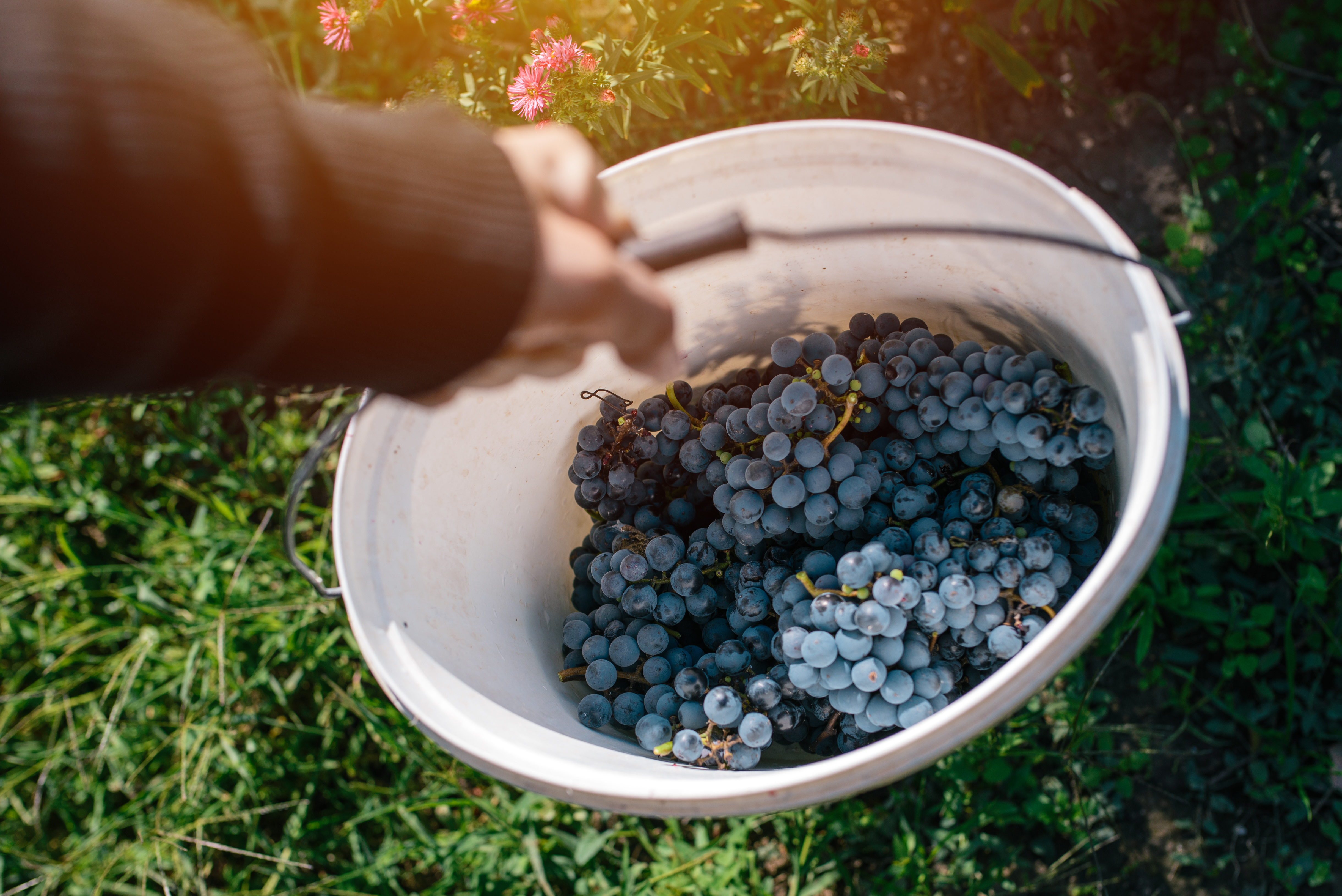 Guest Post What Exactly Is A Natural Wine