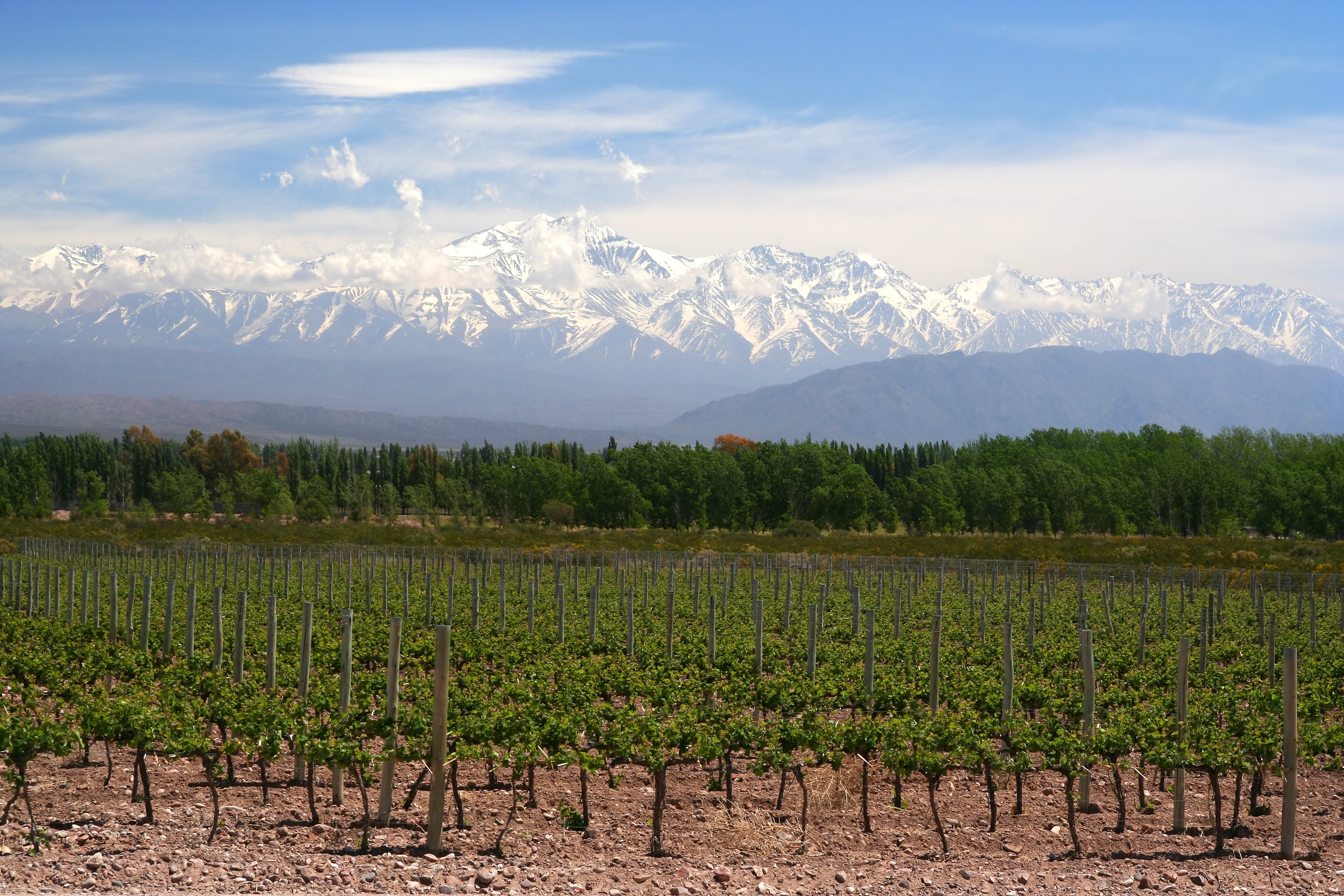 Salta: The Highest and the Lowest – Wine, Wit, and Wisdom